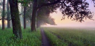 橡木树丛 免版税图库摄影