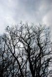 橡木树干 库存照片