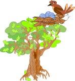 橡木树 免版税库存照片
