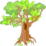 橡木树 库存照片