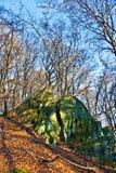 橡木森林在秋天 库存图片