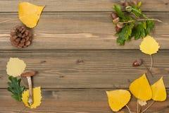 橡木橡子,杉木锥体,秋叶,狂放 免版税库存照片