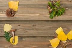 橡木橡子,杉木锥体,秋叶,狂放 免版税库存图片