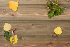 橡木橡子,秋叶,狂放的蘑菇 木 库存照片