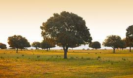 橡木河边低地,冬青属在地中海森林Cabaneros公园,西班牙 免版税库存图片