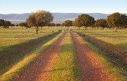 橡木河边低地,冬青属在地中海森林Cabaneros公园,西班牙 免版税库存照片