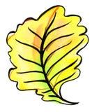 橡木的秋天叶子 水彩 库存图片