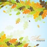 橡木秋天背景,传染媒介 免版税图库摄影