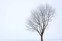 橡木结构树冬天 免版税库存图片