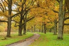 橡木胡同在公园 免版税库存图片