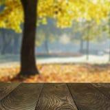 从橡木表面和自然blured背景的模板 免版税库存图片