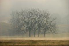 橡木雾 库存照片