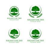 橡木,树,商标 免版税图库摄影
