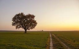 橡木(秋天) 库存照片