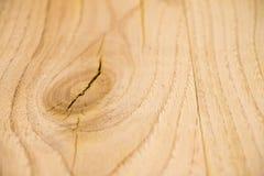 橡木 免版税库存图片