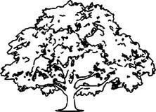 橡树剪影例证/eps 免版税库存图片