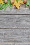 橡树叶子和种子在木背景的 秋季背景 库存照片