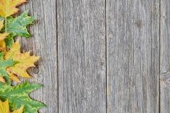 橡树叶子和种子在木背景的 库存图片