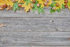 橡树叶子和种子在木背景的 免版税库存照片