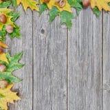 橡树叶子和种子在木背景的 库存照片