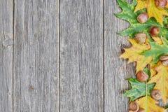 橡树叶子和种子在木背景的 图库摄影