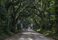 橡树向植物学海湾种植园的隧道路在Editso海岛S 库存图片