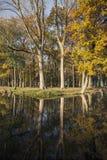 橡树和反射在运河在武尔登附近Netherlan的 免版税库存图片