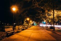 橡树和道路在晚上在Forsyth停放,大草原,乔治亚 免版税库存照片