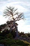 橡树在冬天在一个晴天 免版税库存图片