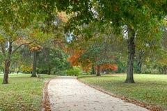 橡树在把变成秋天桔子树荫的公园 免版税库存图片
