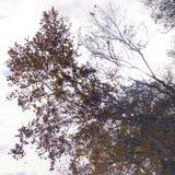 橡树的抽象剪影 库存照片