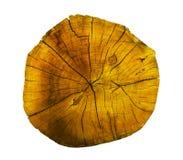 橡树,圆的裁减日志,隔绝在白色背景 免版税库存图片