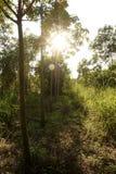 橡胶园,草覆盖胎盘是坚实的 免版税库存图片