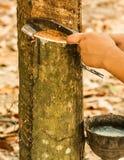 橡胶开发的结构树 图库摄影