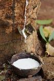 橡胶树牛奶  免版税库存照片