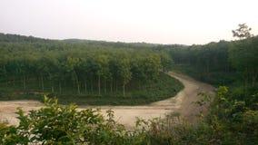 橡胶森林 图库摄影