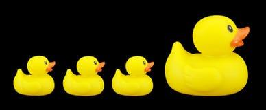 橡胶的duckies 库存图片