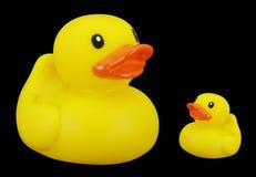橡胶的duckies 免版税库存图片