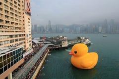 橡胶鸭子在香港 免版税图库摄影