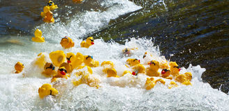 橡胶鸭子赛跑 免版税库存照片