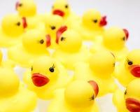 橡胶Duckies 图库摄影