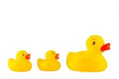 橡胶Duckies 免版税库存照片
