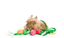 欢乐兔宝宝五颜六色的复活节彩蛋 免版税库存照片