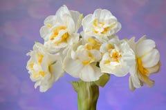 欢乐的花束 库存图片