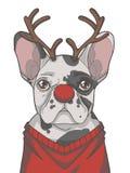 欢乐黑白染色法国牛头犬狗穿戴当与鹿角和红色鼻子图表传染媒介illustra的圣诞节驯鹿 皇族释放例证