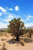 欢迎到沙漠丝兰! 免版税图库摄影