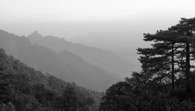 欢迎在sanqingshan山,黑白图象的杉木剪影  免版税图库摄影