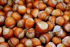 欧洲榛树螺母 库存照片