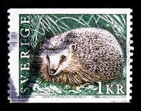 欧洲猬猬属europaeus,野生动物serie,大约1996年 库存图片