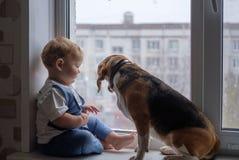 欧洲男孩和小猎犬看窗口 免版税库存照片